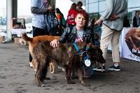 Благотворительный фестиваль помощи животным, Фото: 15