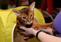 Выставка кошек в Искре, Фото: 24