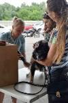 В тульском «Макси» прошел благотворительный фестиваль помощи животным, Фото: 11