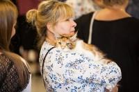 """Выставка """"Пряничные кошки"""". 15-16 августа 2015 года., Фото: 9"""