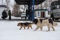 Крематорий для собак в Венёве, 24.03.2016, Фото: 45