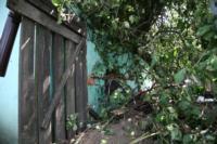 В Барсуках фура влетела в огород и сломала дерево, Фото: 15