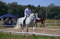 В Ясной поляне стартовал турнир по конному спорту, Фото: 66