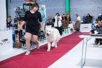Выставка собак в Туле, Фото: 55