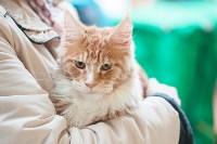 Выставка кошек в МАКСИ, Фото: 9