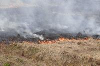 В Мясново загорелось поле, Фото: 3