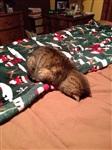 Котики устали, Фото: 4