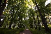 Летний день в Ясной Поляне, Фото: 53