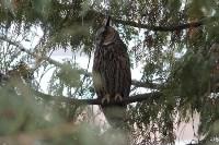 В Привокзальном районе поселились ушастые совы, Фото: 4