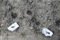 Бродячие собаки погубили рассаду тулячки и довели ее до сердечного приступа, Фото: 11