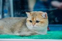 """Выставка """"Пряничные кошки"""" в ТРЦ """"Макси"""", Фото: 34"""