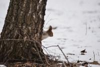 В Центральном парке прошёл рейд по выявлению нарушений выгула собак, Фото: 2