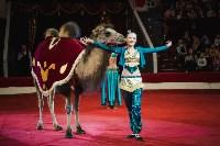 «Шоу Слонов» в Тульском цирке, Фото: 12