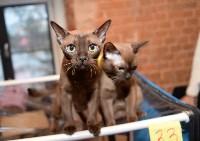 Выставка кошек в Искре, Фото: 4