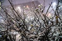 Апрельский снегопад - 2021, Фото: 88