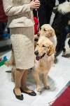 Выставка собак в Туле, Фото: 116