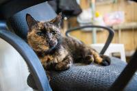 Волонтеры спасли кошек из адской квартиры, Фото: 90