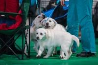 Выставка собак в Туле, Фото: 42