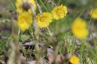 Краски весны в Туле, Фото: 41