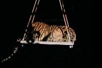 Шоу Lovero в тульском цирке, Фото: 42