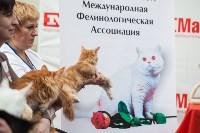 Выставка кошек в МАКСИ, Фото: 46