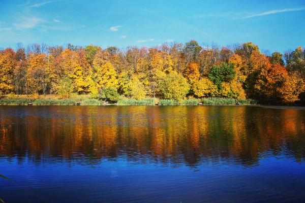 Осень. Сказочный чертог,  Всем открытый для обзора. Просеки лесных дорог, Заглядевшихся в озера.©