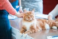 Международная выставка кошек. 16-17 апреля 2016 года, Фото: 99
