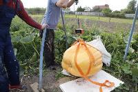 Гигантские тыквы из урожая семьи Колтыковых, Фото: 35