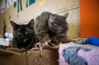 Волонтеры спасли кошек из адской квартиры, Фото: 35