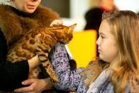 Пряничные кошки, Фото: 22