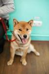 Выставка собак в Туле, 29.11.2015, Фото: 100
