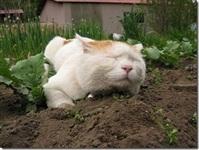 Самый ленивый кот, Фото: 1