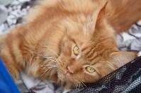 """Выставка """"Пряничные кошки"""" в ТРЦ """"Макси"""", Фото: 17"""