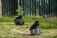 Во дворе Тульского областного краеведческого музея посадили сосны, Фото: 4