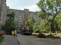 вырубка деревьев во дворе дома №33 по ул. Горького в Туле, Фото: 13