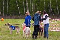В Туле состоялись собачьи бега, Фото: 50