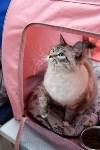 """Выставка """"Пряничные кошки"""" в ТРЦ """"Макси"""", Фото: 36"""