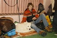 В Туле прошла всероссийская выставка собак, Фото: 29
