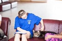 """Выставка """"Пряничные кошки"""". 15-16 августа 2015 года., Фото: 92"""
