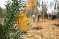 В Центральном парке Тулы появился сосновый бор «Слободы», Фото: 63