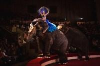 «Шоу Слонов» в Тульском цирке, Фото: 19