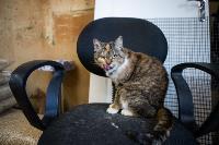 Волонтеры спасли кошек из адской квартиры, Фото: 26