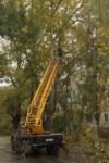 Кронирование тополей на ул. Калинина, Фото: 1