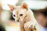 """Выставка """"Пряничные кошки"""". 15-16 августа 2015 года., Фото: 68"""
