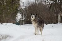 Крематорий для собак в Венёве, 24.03.2016, Фото: 38
