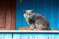 Тульские котики, Фото: 24