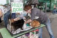 III благотворительный фестиваль помощи животным, Фото: 9