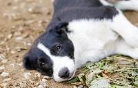 Собаки на тульской метеостанции, Фото: 7