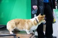 Выставка собак в Туле 14.04.19, Фото: 2
