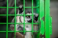 Цирк Гии Эрадзе в Туле, Фото: 7